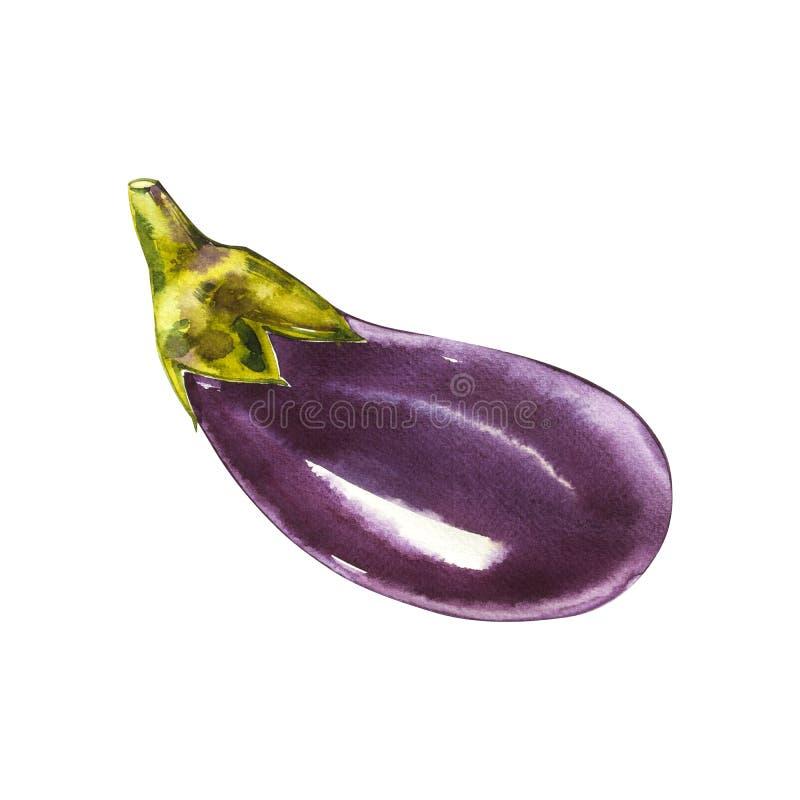 eggplant Pintura tirada mão da aquarela no fundo branco Ilustração da aguarela ilustração do vetor