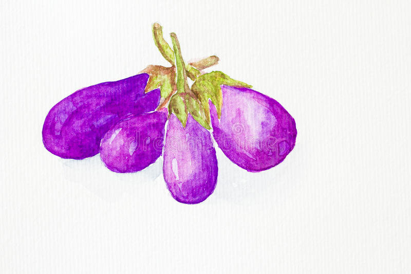 Eggplant watercolor painted stock illustration
