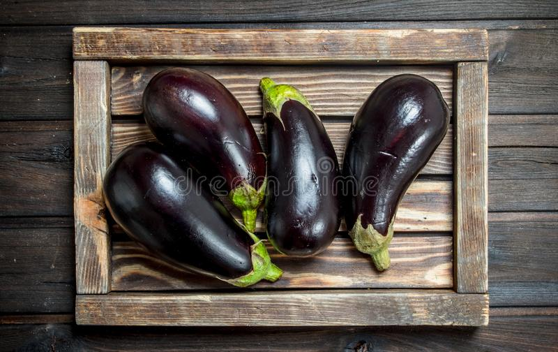 Eggplant on a wooden tray. On wooden background royalty free stock image