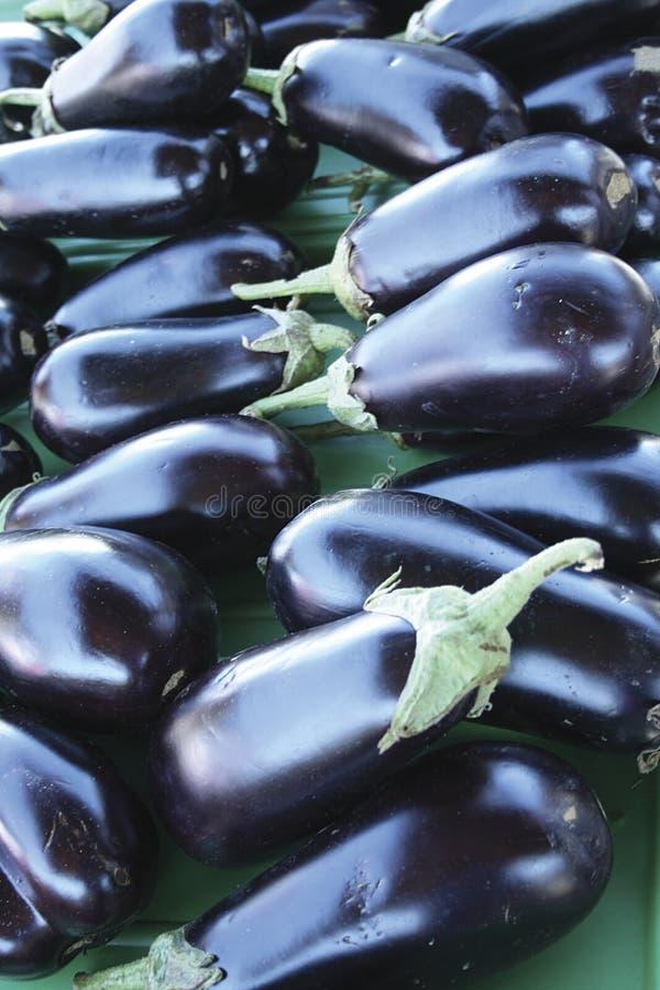 Free Eggplants Royalty Free Stock Images - 2959479