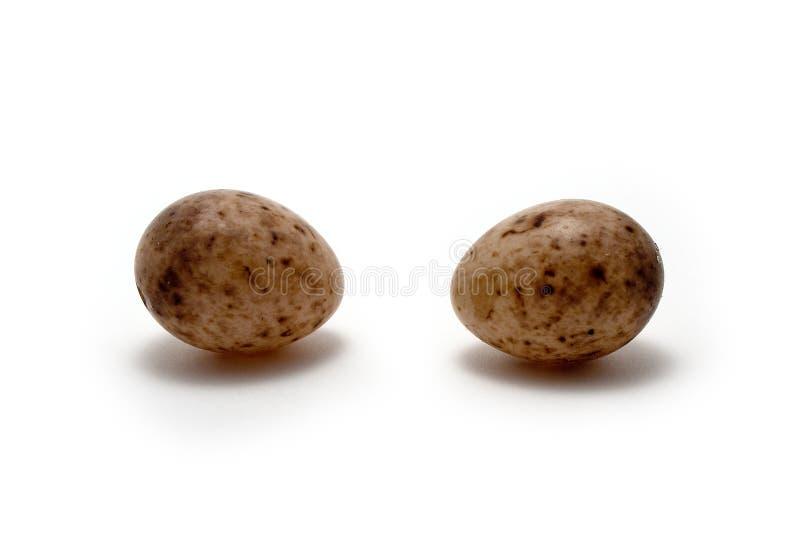 Eggs большой Tit S Стоковые Изображения RF
