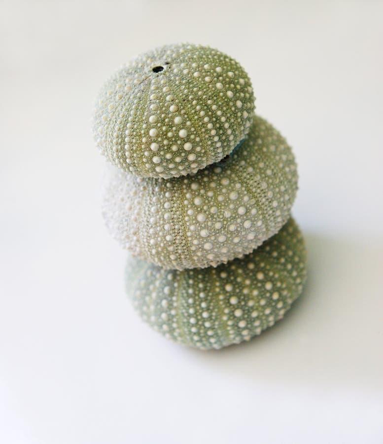 eggs море стоковое изображение rf