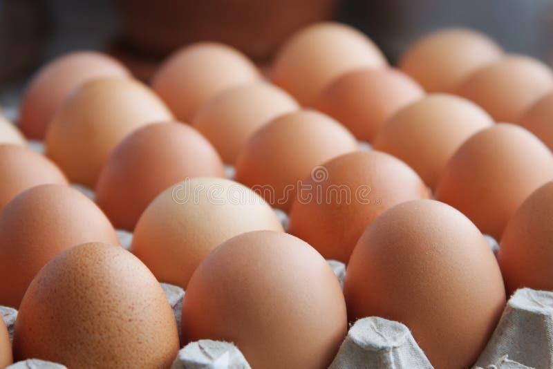 Eggs. Chicken eggs brown color on carton stock photo