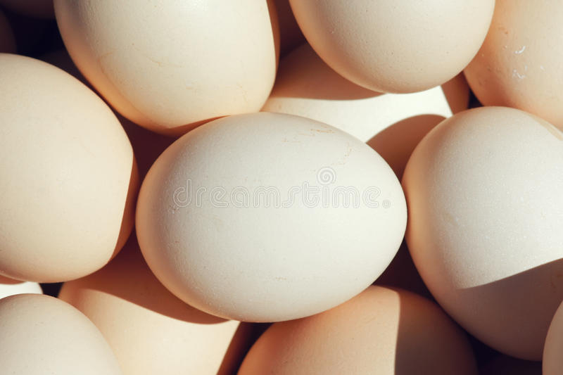 Download Eggs stock photo. Image of chicken, eating, close, animals - 26523472