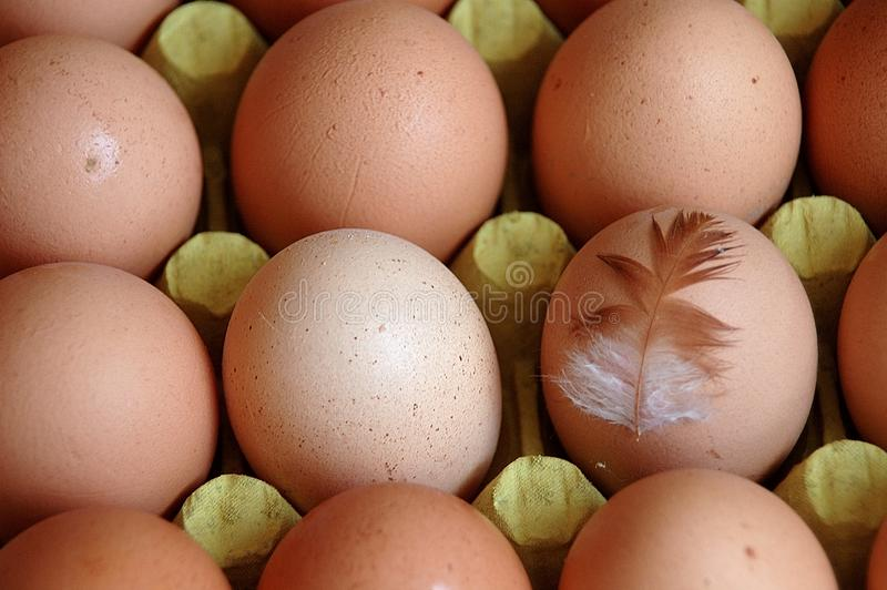 Download Eggs stock photo. Image of package, yolk, fowl, plume - 4343698