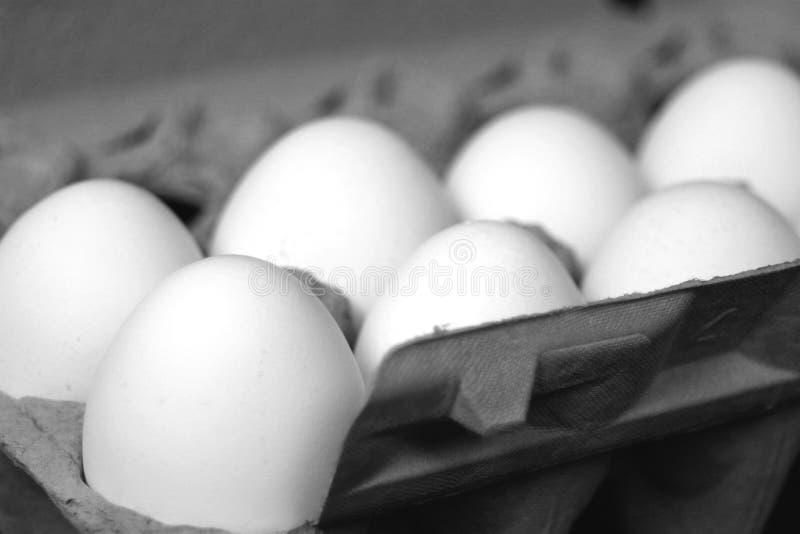 Eggs royalty free stock photo