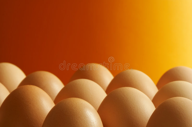 Eggs. Some eggs stock images