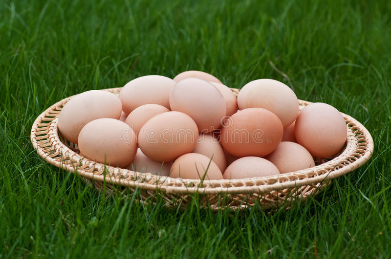 Download Eggs in the basket stock image. Image of eggshell, event - 19352147
