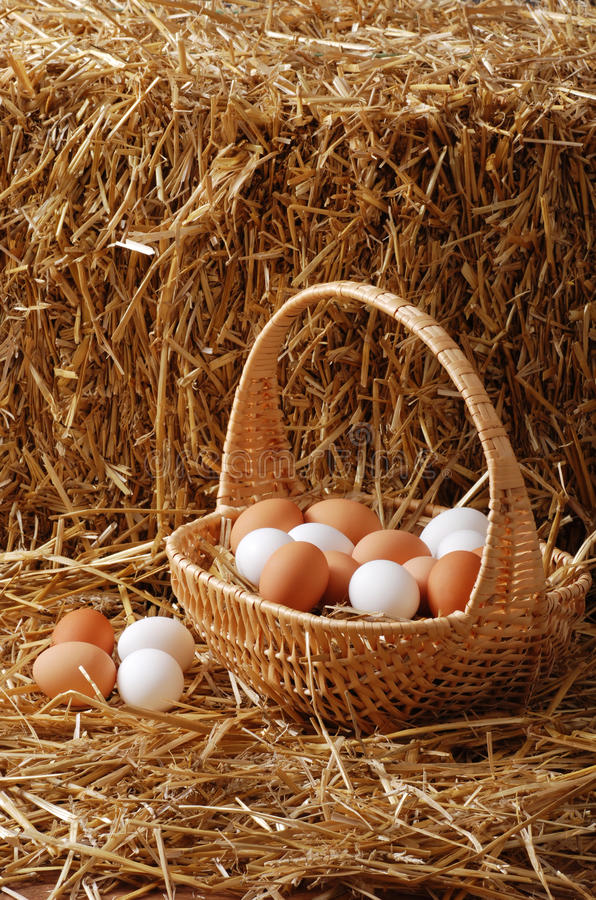 Download Eggs in a basket stock image. Image of clutch, agriculture - 23072877