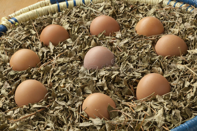 Eggs in a basket with dried henna leaves royalty free stock images