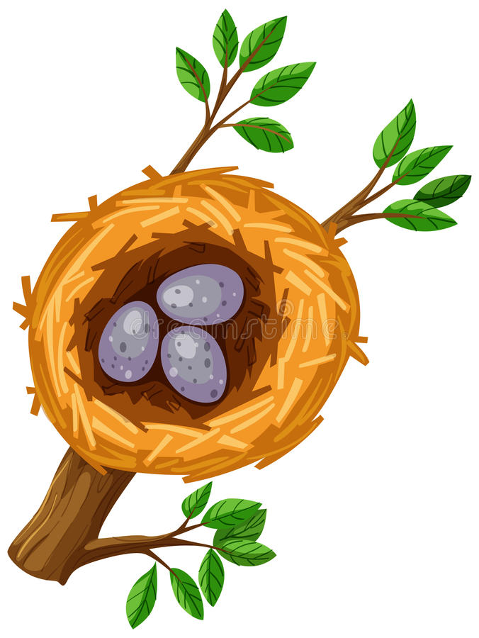 Eggs in bird nest royalty free illustration