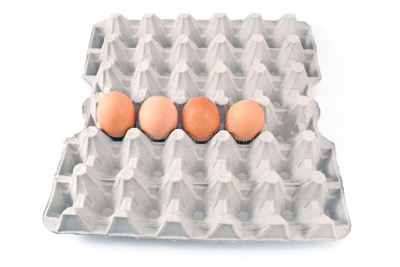Eggs in cardboard royalty free stock photos
