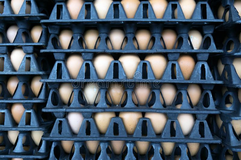Eggs in cardboard boxes stacked in rows in market stock photo