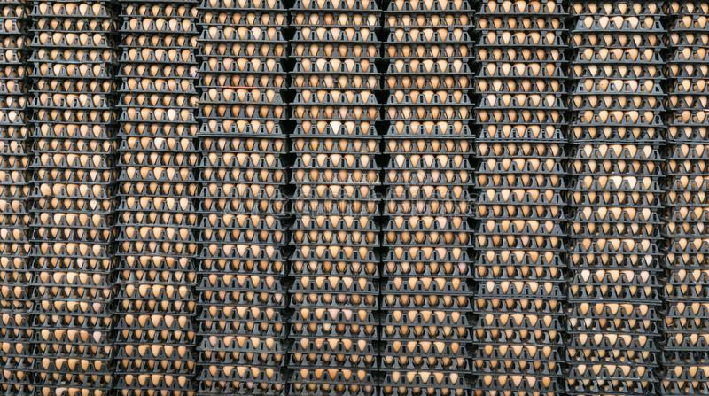 Eggs in cardboard boxes stacked in rows in market stock photography