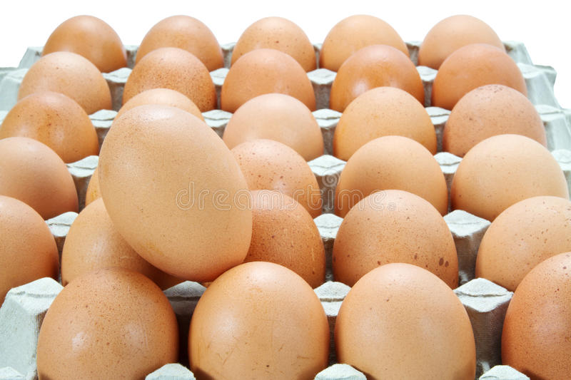 Download Eggs in the Carton stock image. Image of life, chicken - 25998669