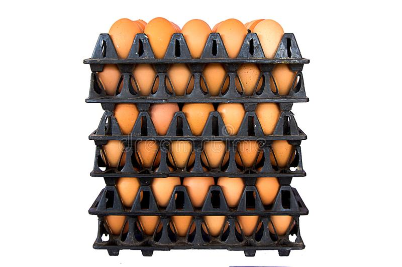 Eggs, Chicken Egg,Eggs in the package isolated on a white background that can be easily used to make illustrations or designs. Eggs, Chicken Egg,Eggs in the royalty free stock image