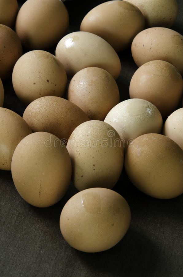 Download Eggs of chickens. stock image. Image of view, collection - 31886301