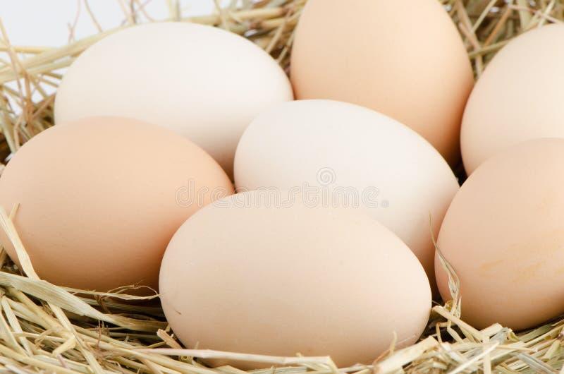 Eggs closeup stock photo