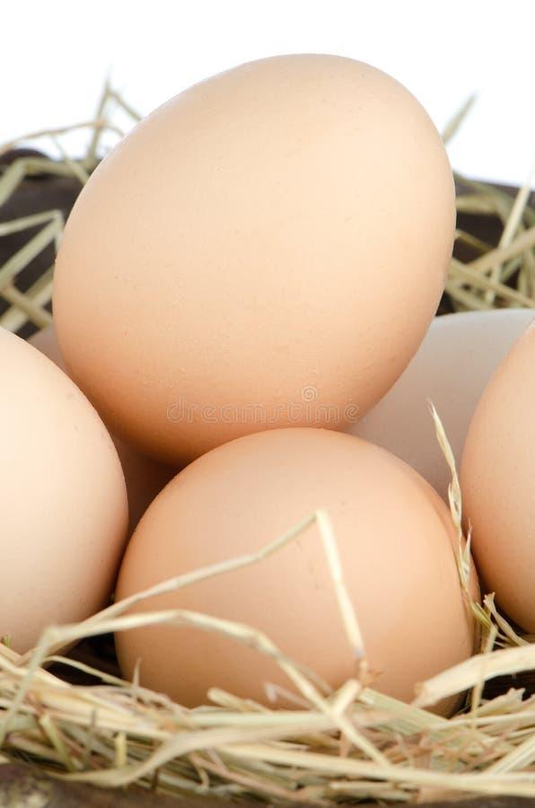 Eggs closeup royalty free stock image