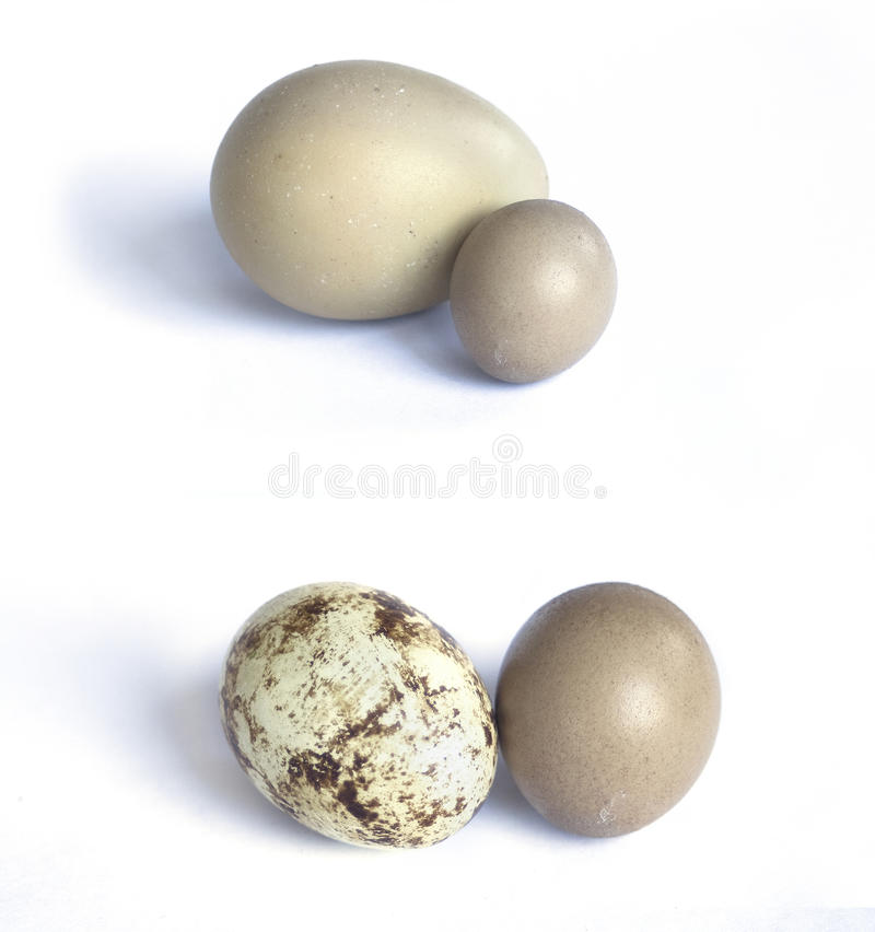 Eggs die Ansammlung, die auf Weiß getrennt wird: Fasan, Wachtel lizenzfreies stockfoto