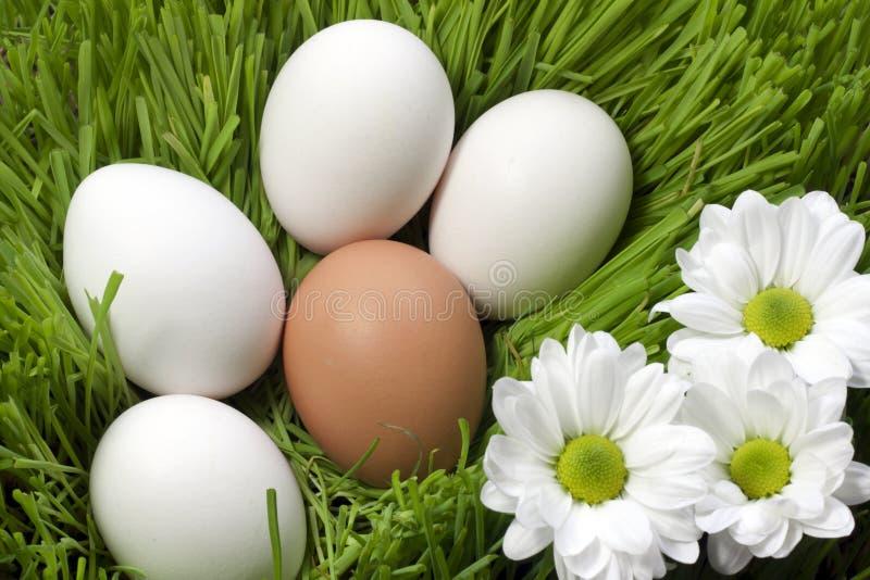 Eggs Ecological Stock Photo
