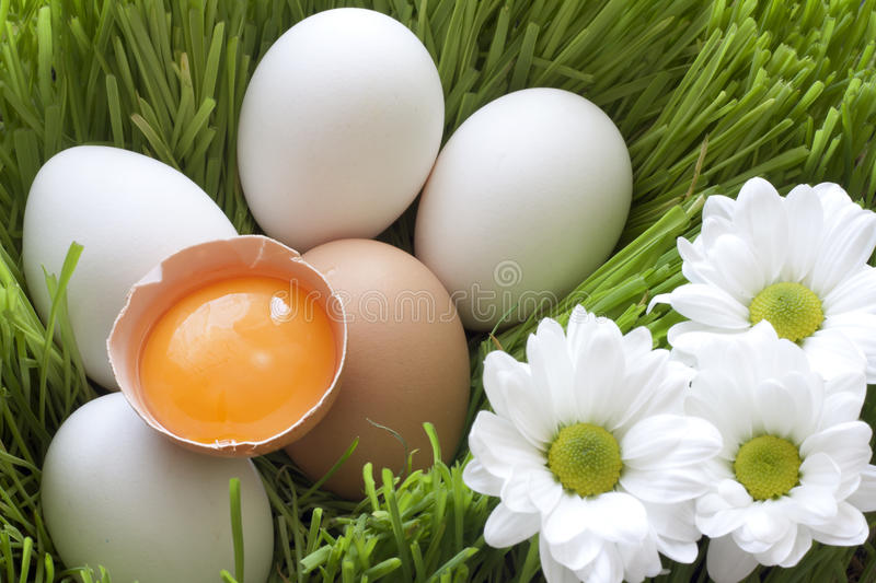 Download Eggs Ecological And Yellow Yolk Stock Image - Image: 23027229