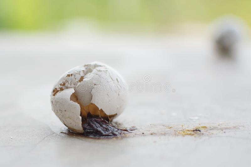 Eggs and eggshell cracked on the floor royalty free stock image
