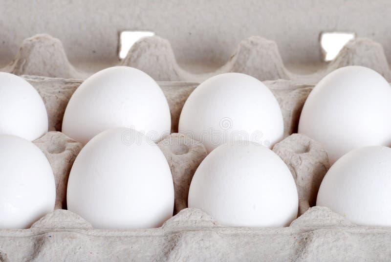 Eggs el primer fotografía de archivo libre de regalías