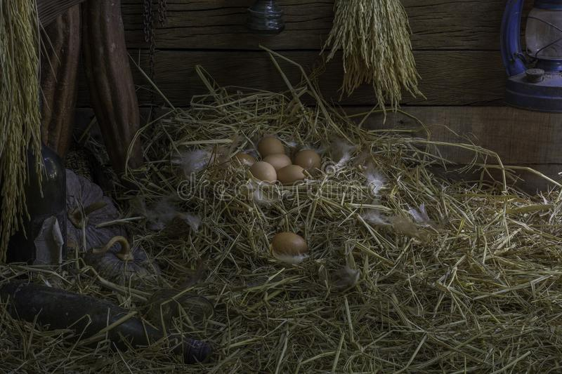 Eggs and feathers in the straw nest are in the granary of a farmhouse, barn or garage. Lamp on wooden wall And a bottle of wine or stock photos