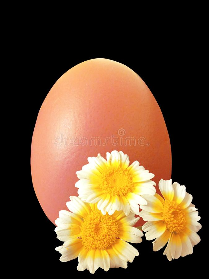 Eggs and flowers stock photos