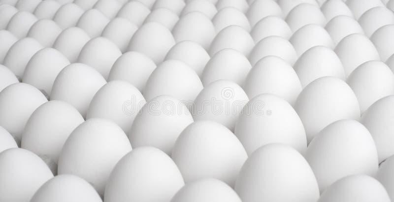 Eggs. Great many white new-laid eggs, horizontal photo royalty free stock photo
