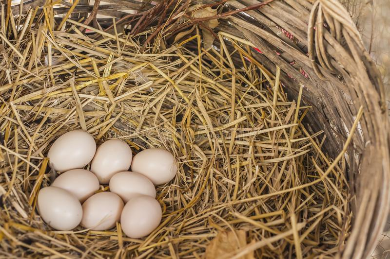 Eggs on the hay nest in the natural basket of chickens royalty free stock photo