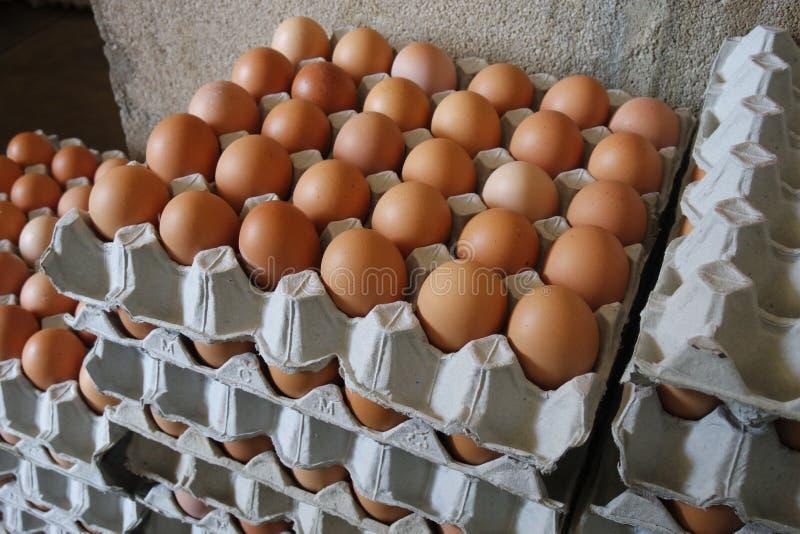 Eggs le récipient photo stock