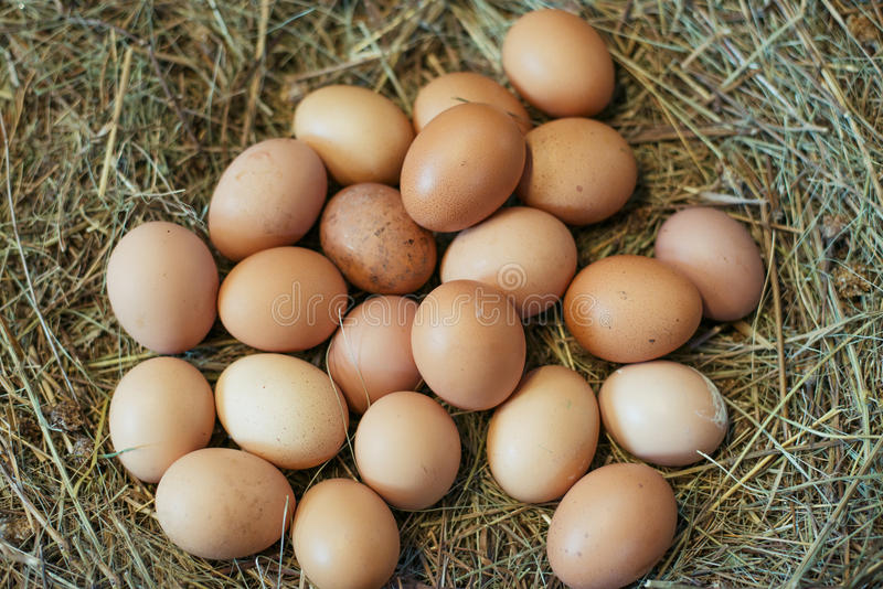 Eggs in the manger. Nature stock photography