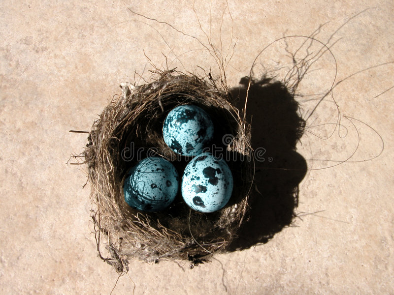 Download Eggs And Nest Stock Photo - Image: 2480