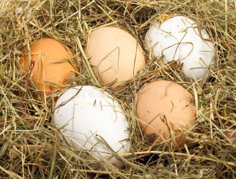 Download Eggs in nest stock image. Image of eggshell, farm, organic - 18474687