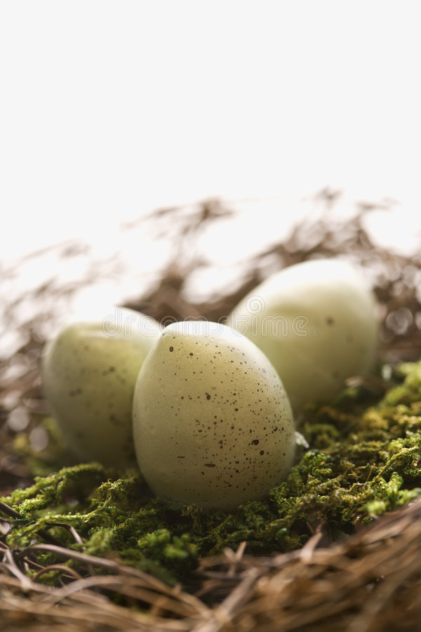 Download Eggs in nest. stock image. Image of spotted, spring, planning - 2426185