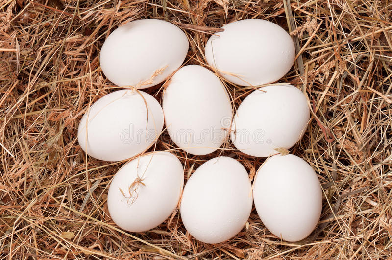 Download Eggs in nest stock image. Image of groceries, diet, food - 26828429