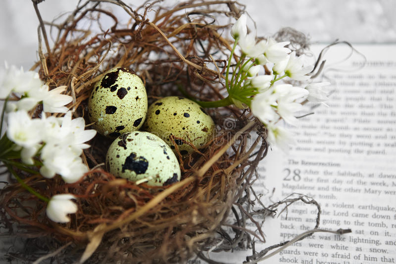 Eggs in nest on Bible stock images