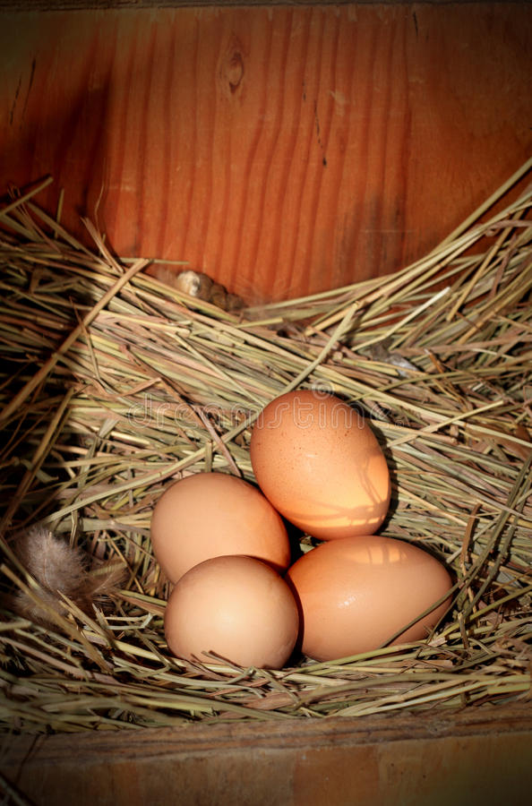 Eggs in a nest royalty free stock photos