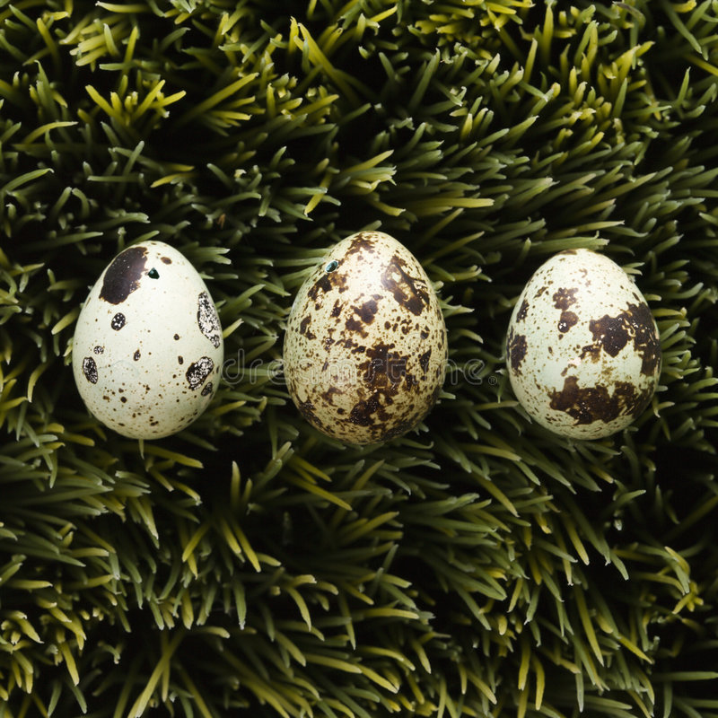 Free Eggs On Grass. Stock Images - 2432244
