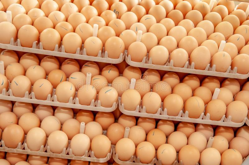 Lot of eggs on tray from breeders farm. Eggs in production line of selecting quality and healthy egg process in breeders incubation plant stock photos