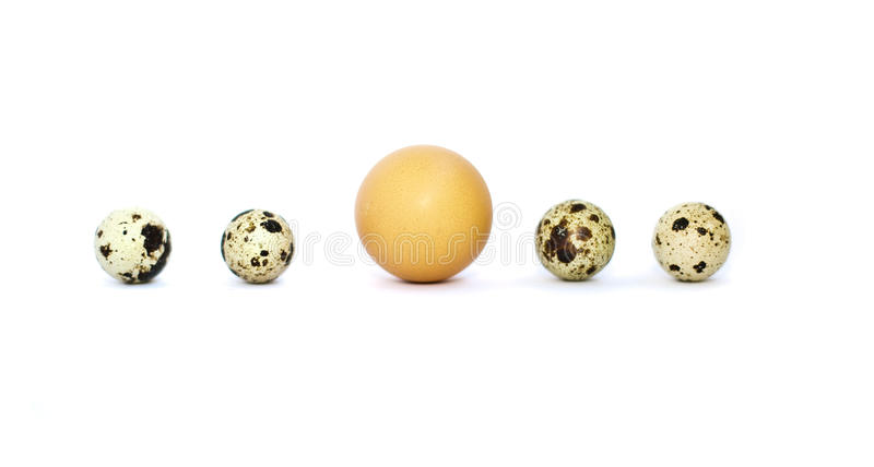 Download Eggs In A Row Stock Image - Image: 26376561