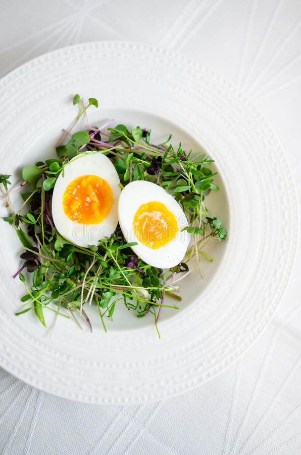 Eggs with sprouts on plate royalty free stock photo