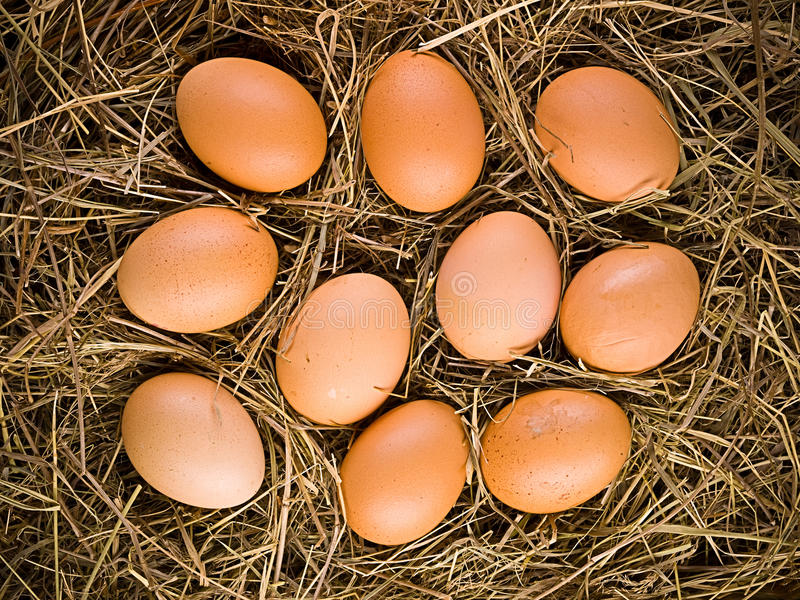 Eggs on straw stock photo