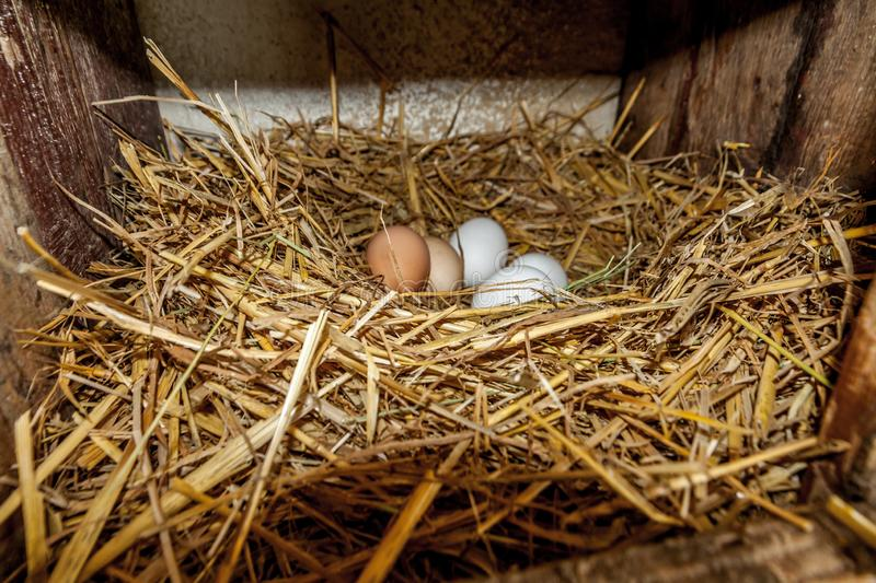 Eggs in the straw stock images