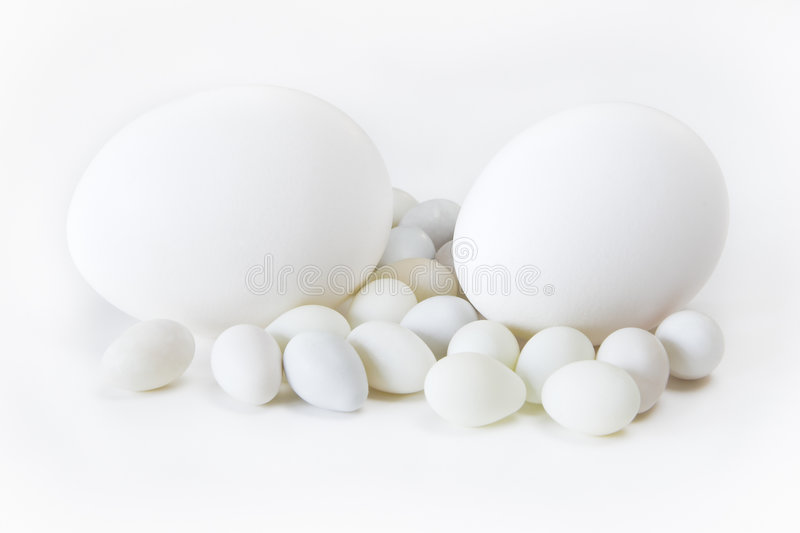 Eggs with White Background royalty free stock photography