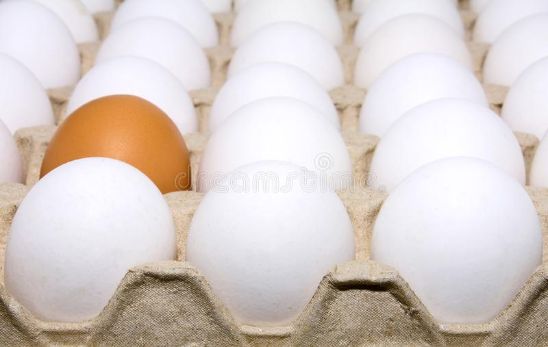Eggs white and brown royalty free stock photography