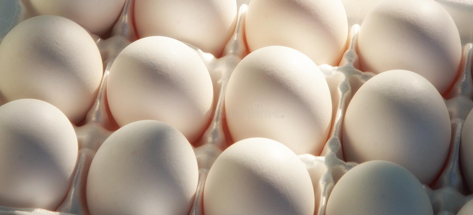 Tray of eggs. Whole eggs in a carton in sunlight royalty free stock photography