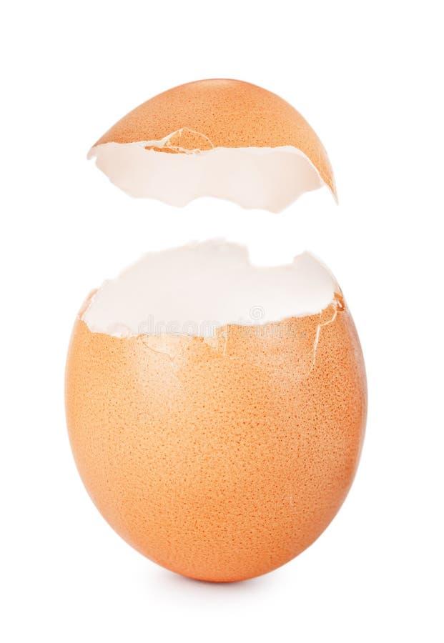 eggshell стоковое изображение rf